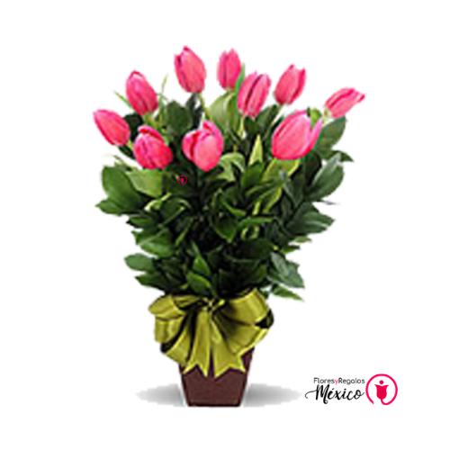 alegria con tulipanes