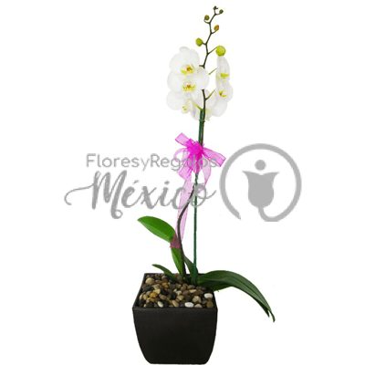 orquideablanxa400x400