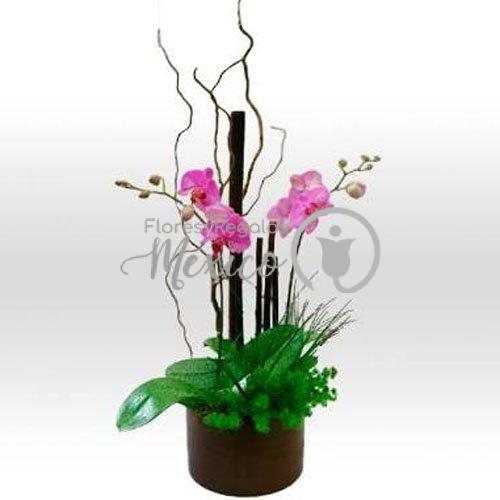 Orquidea fiusha